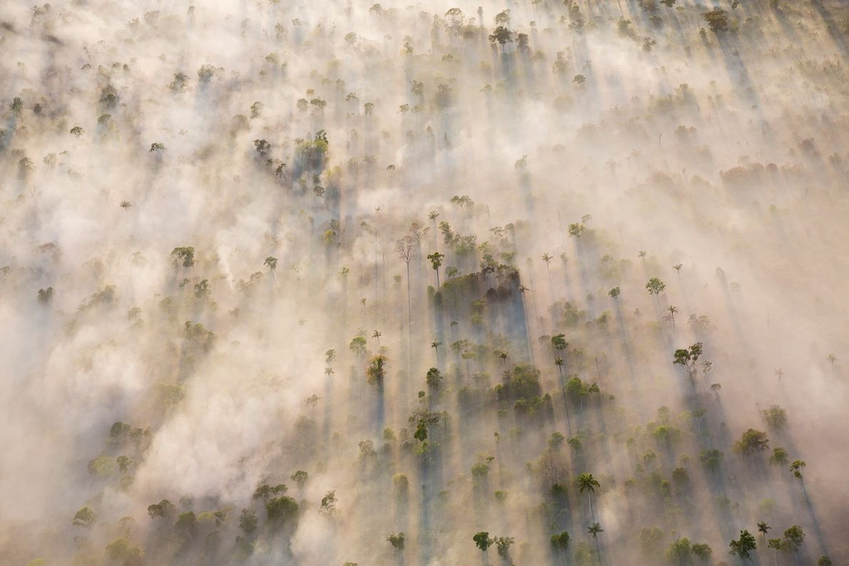 Morning sunlight falls through the smoke from burning trees in Mato Grosso, near the center of ...