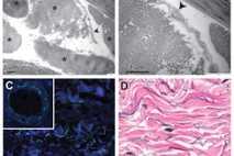 Asterisks denote collagen bundles (top left). An arrow points to a cell (top right). Darker blue ...