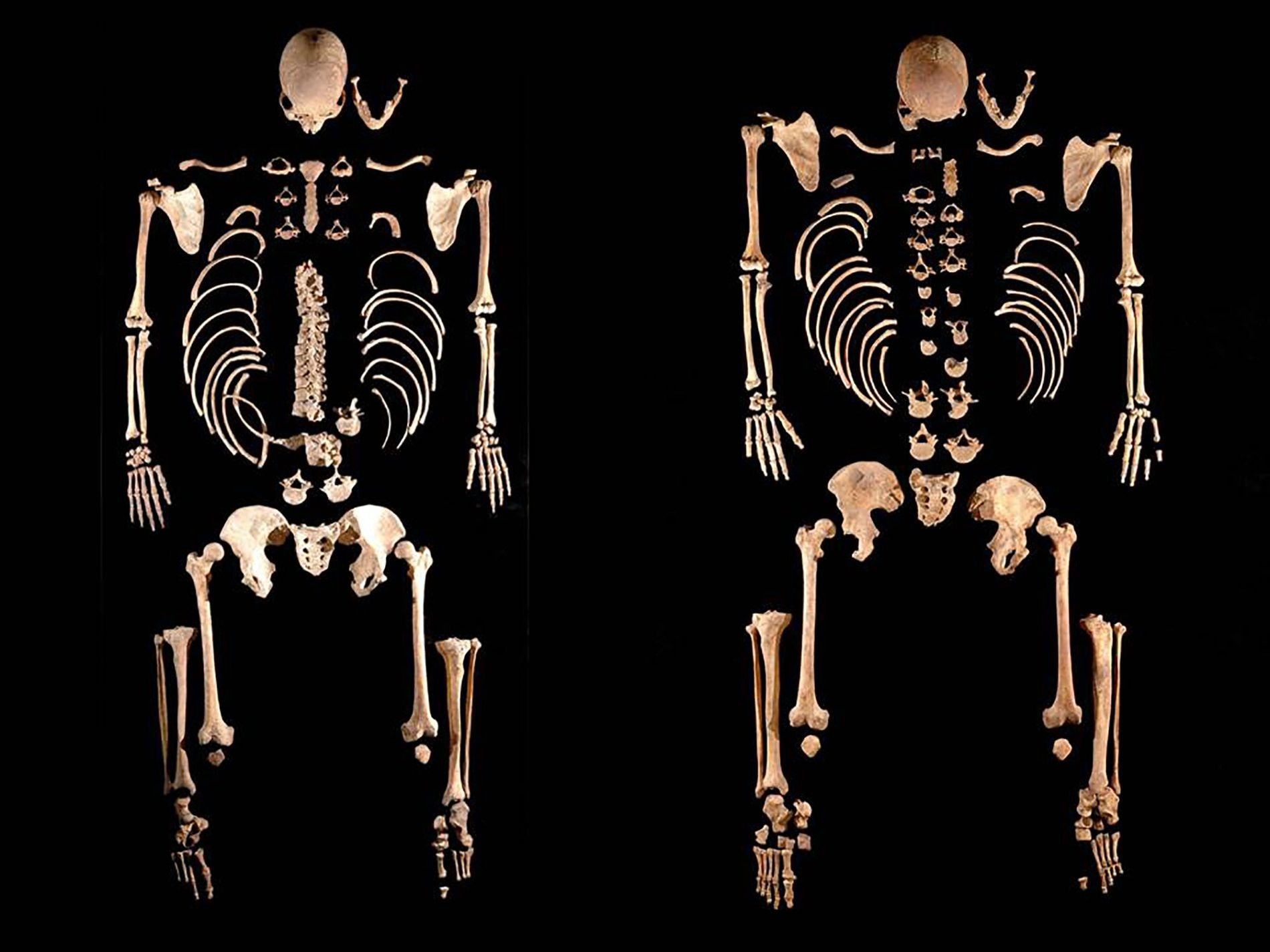 These skeletons of ancient hunter-gatherers—which happen to be brothers—helped researchers discover a surprisingly complex genetic picture ...