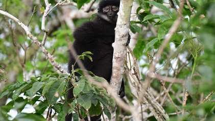 New monkey species found hiding in plain sight