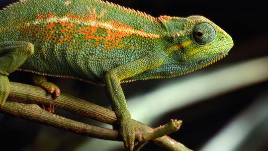 Animal Spies: Creatures Accused of International Espionage