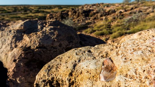 Cape Range National Park's second megalodon tooth (pictured) is still in the area.
