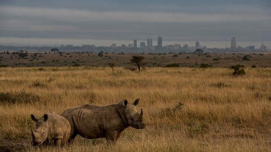 Controversial Railway Splits Kenya's Parks, Threatens Wildlife