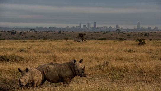 01-nairobi-train-rhinos