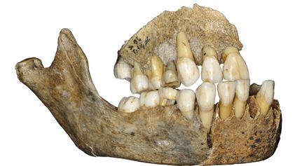 Ancient DNA reveals new twists in Neanderthal migration