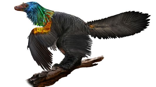 'Rainbow' Dinosaur May Have Sparkled Like a Hummingbird