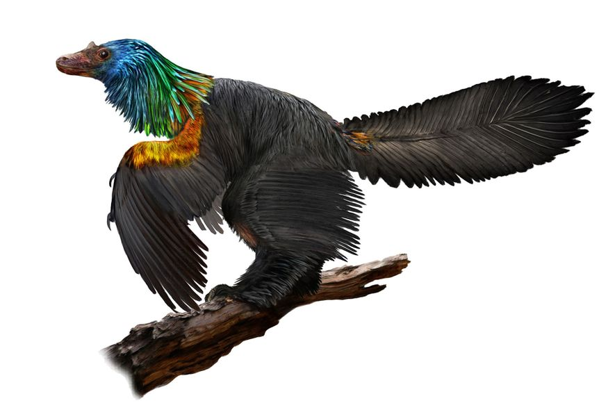 New 'Rainbow' Dinosaur May Have Sparkled Like a Hummingbird