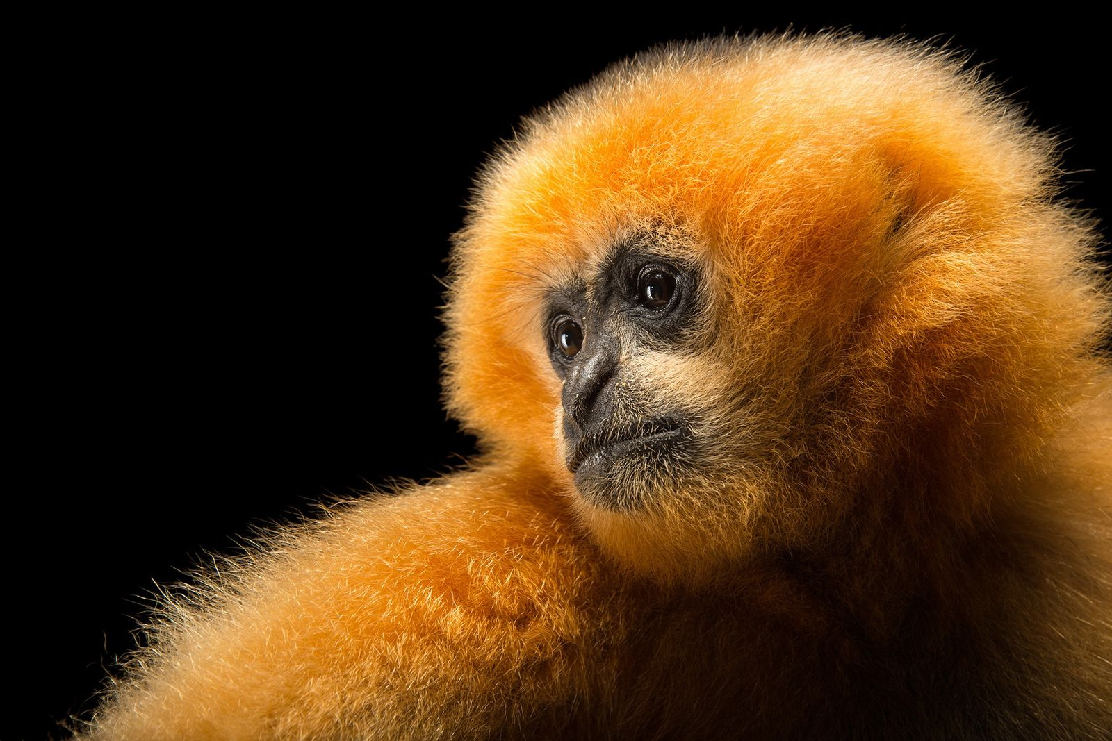 These 50 animals are in peril