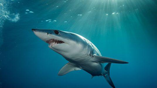 6 Amazing Sharks You've Never Heard Of