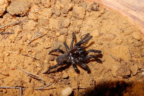 World's Oldest Known Spider Dies at 43, With Lesson for Us