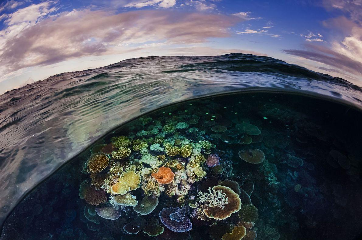 Opal coral reef off Cairns Great Barrier Reef, Australia.