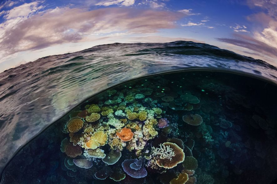 Opal coral reef off Cairns Great Barrier Reef, Australia.