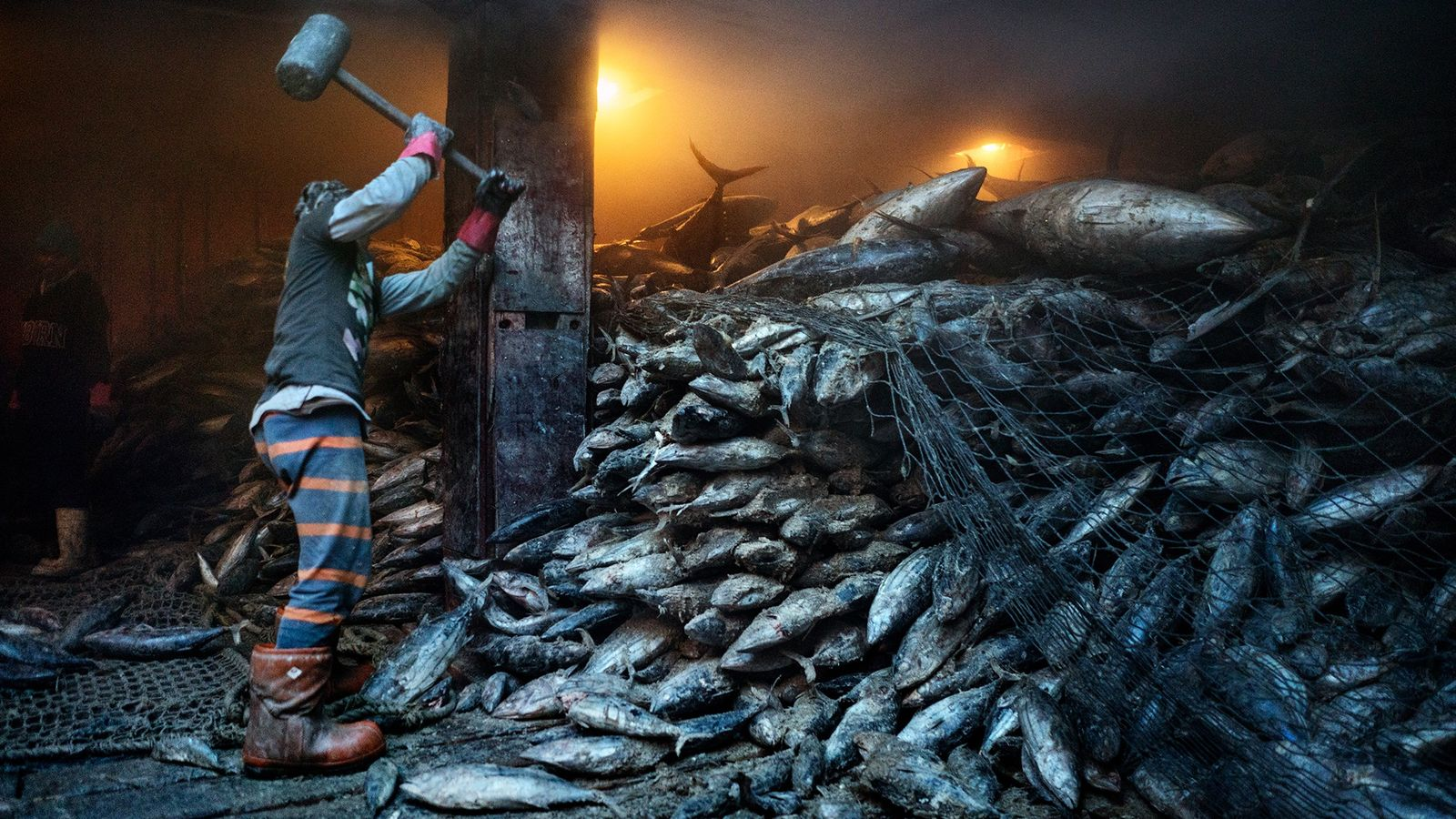 A worker uses a mallet to dislodge frozen tuna aboard a Chinese cargo vessel docked at ...