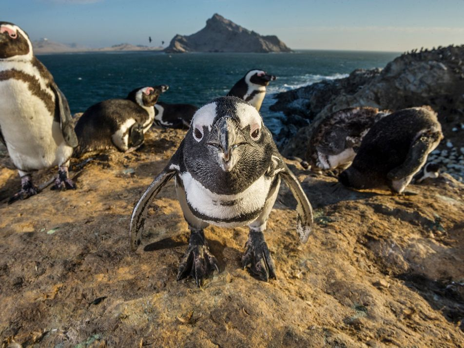 How penguins demonstrate their intelligence