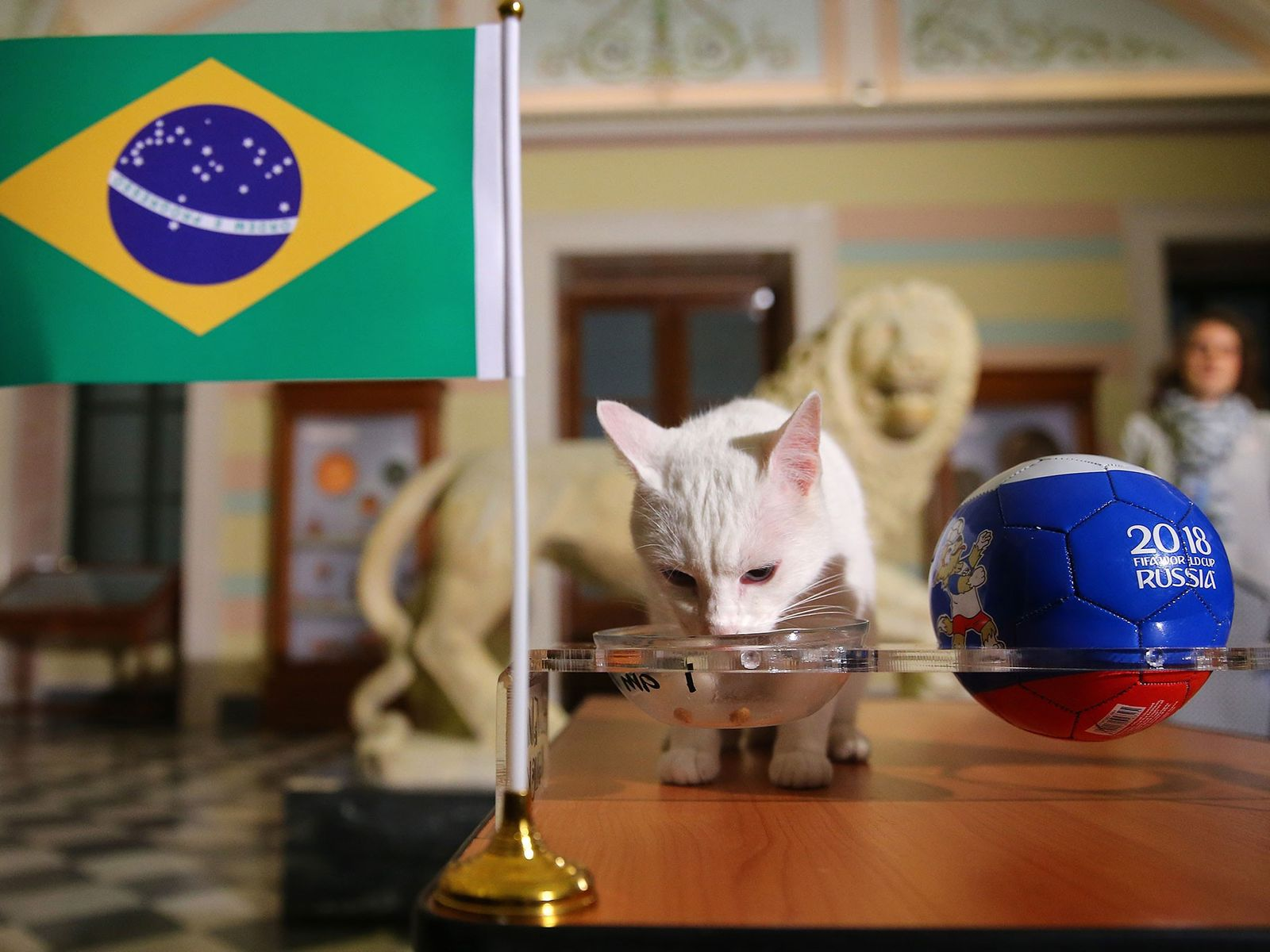 Achilles the Cat, a 2018 FIFA World Cup animal oracle, predicts the result of the match ...