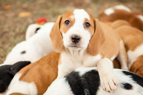 This Is the Age When Puppies Are the Cutest, According to Science