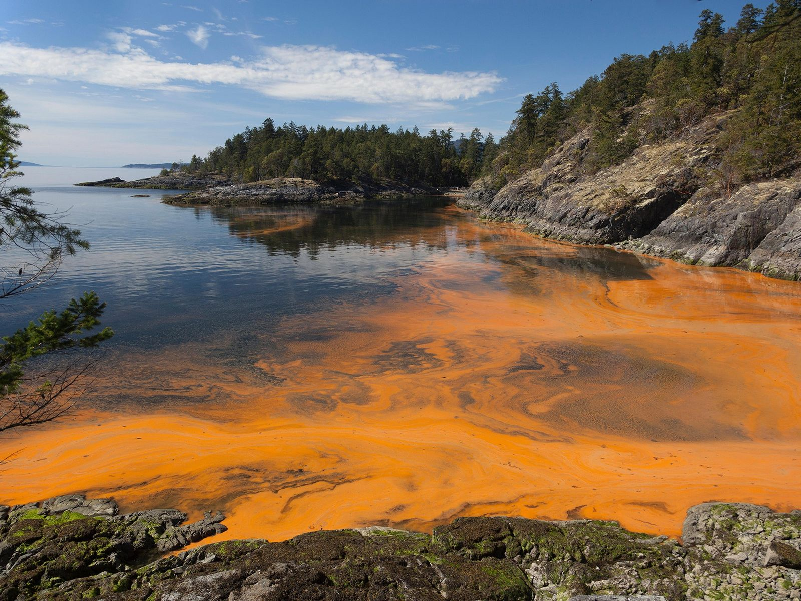 Red tides, a type of harmful algal bloom, colour the water rusty orange along the coast ...