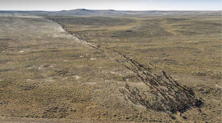 Not far from the Jonah Field in southwestern Wyoming, a thousands cows and their calves cross ...