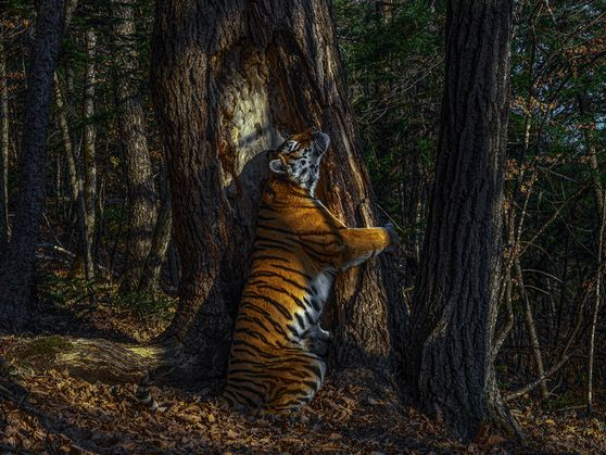 These are the best wildlife photos of 2020