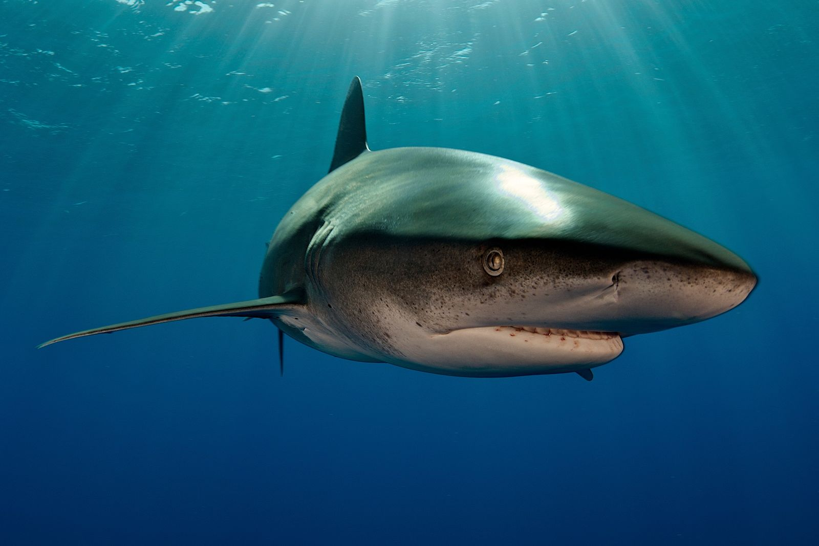 This shark fought off a deep-sea squid, first-ever picture reveals