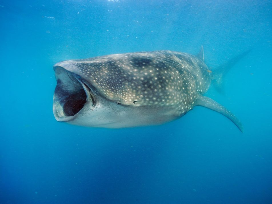 The most fascinating shark discoveries of the past decade