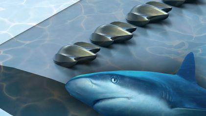 These Tiny Scales Make Sharks Incredibly Fast. Can They Help Us Build Better Planes?