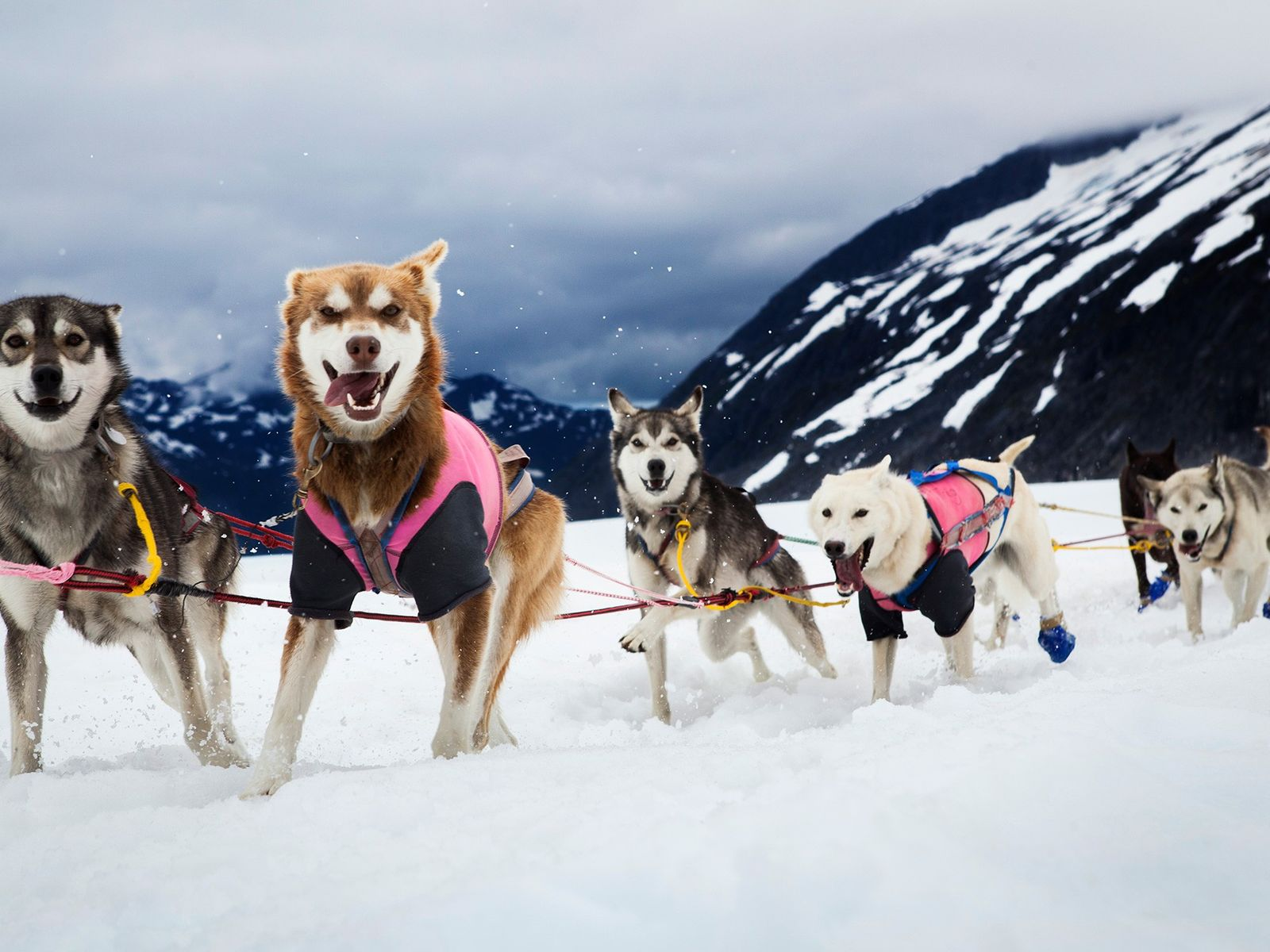 A team of sled dogs race on the Herbert Glacier, near Juneau, Alaska. This group of ...