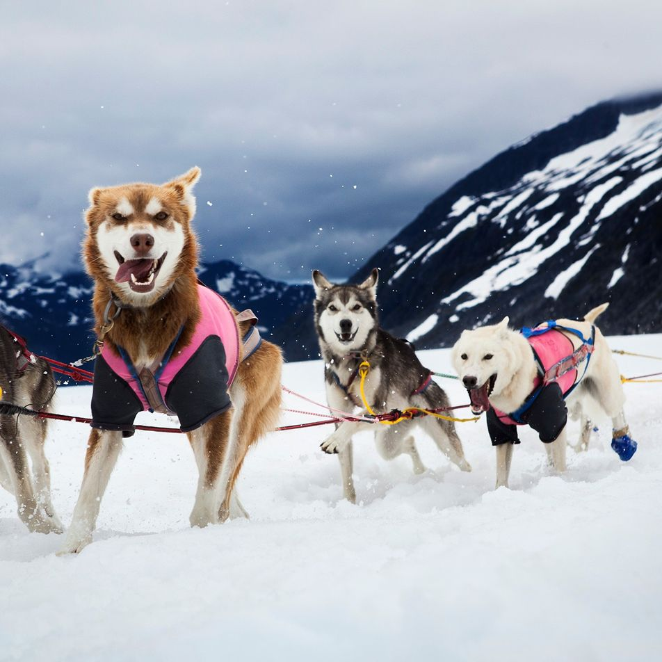Humans and dogs have been sledding together for nearly 10,000 years