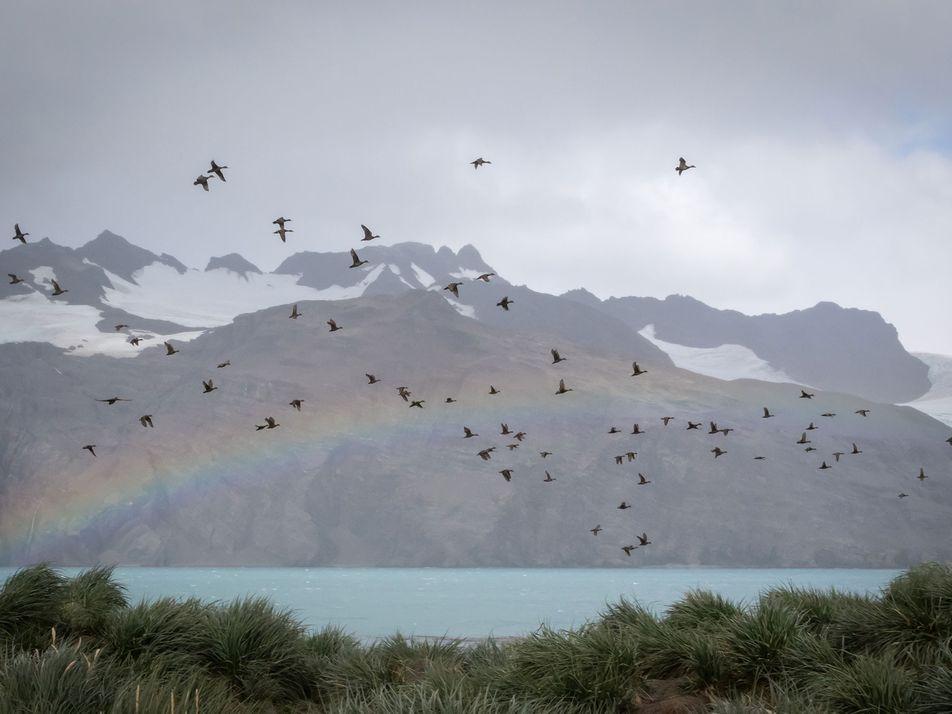 Birdlife Recovering on Rat-Free Island