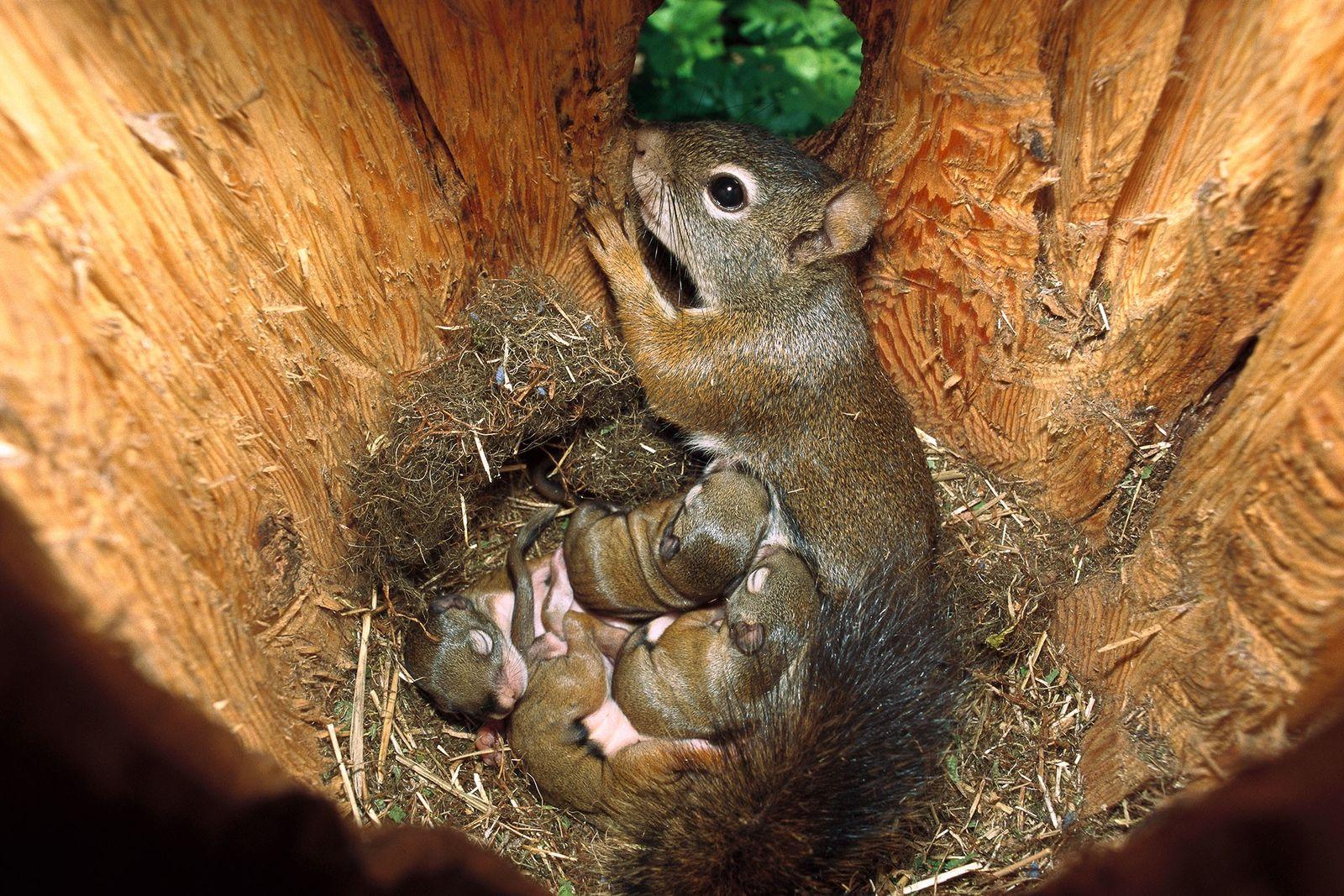 Viral Squirrel Photo Sparks Anatomy Discussion