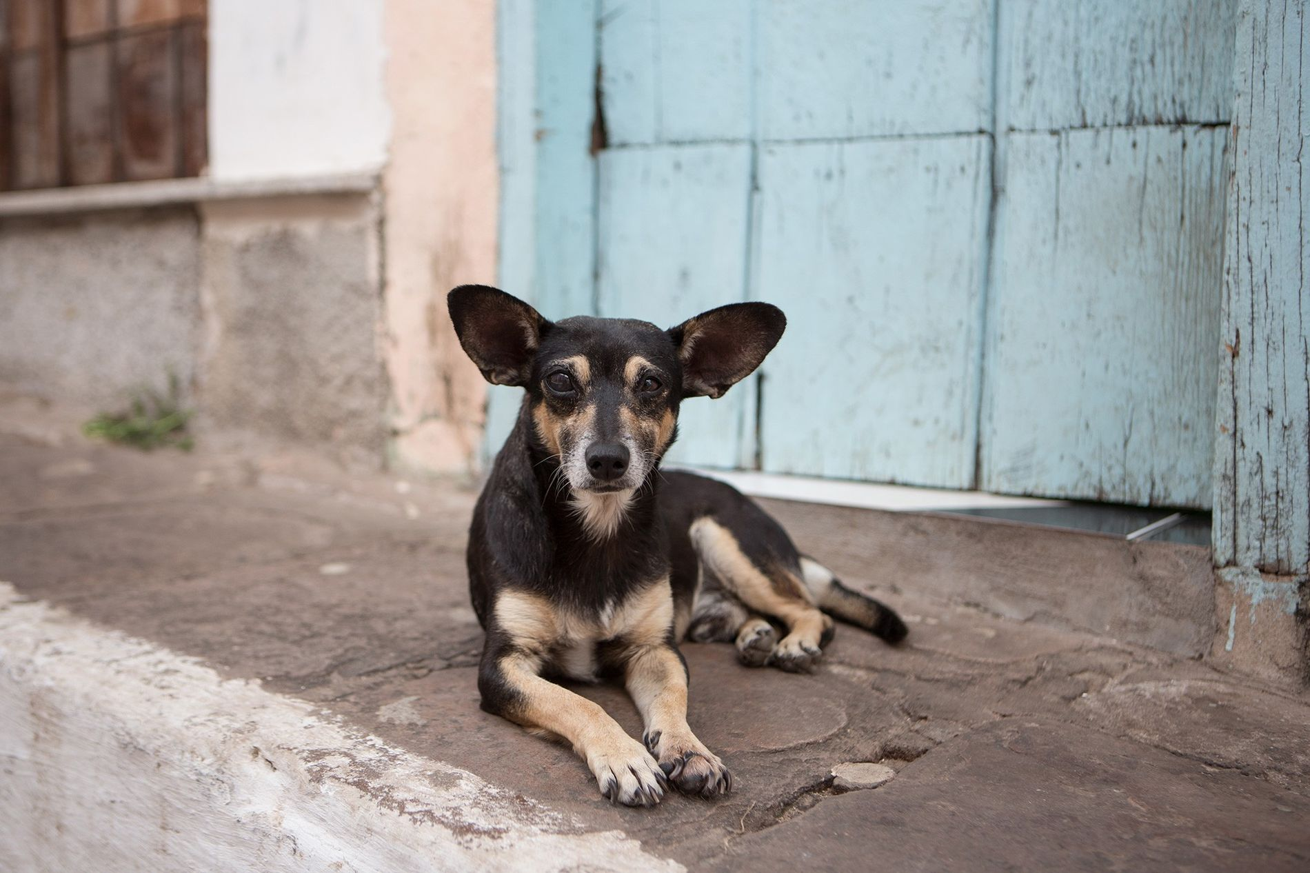 A stray dog rests in Brazil's Chapada Diamantina National Park. There are up to 300 million ...