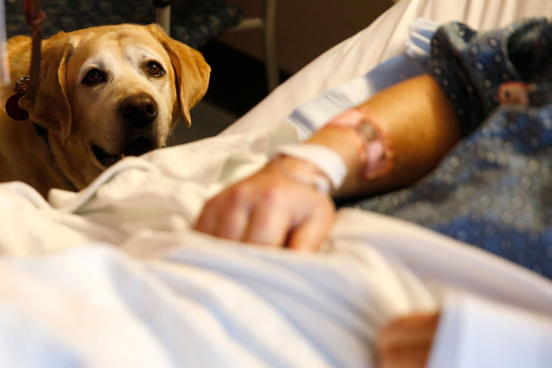 A therapy dog named Tucker visits with patient Jim Cawley at Massachusetts General Hospital in Boston ...