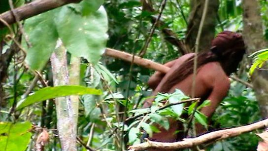 """A fleeting glimpse of the """"lone survivor"""" in the Tanaru Indigenous Land in the state of ..."""