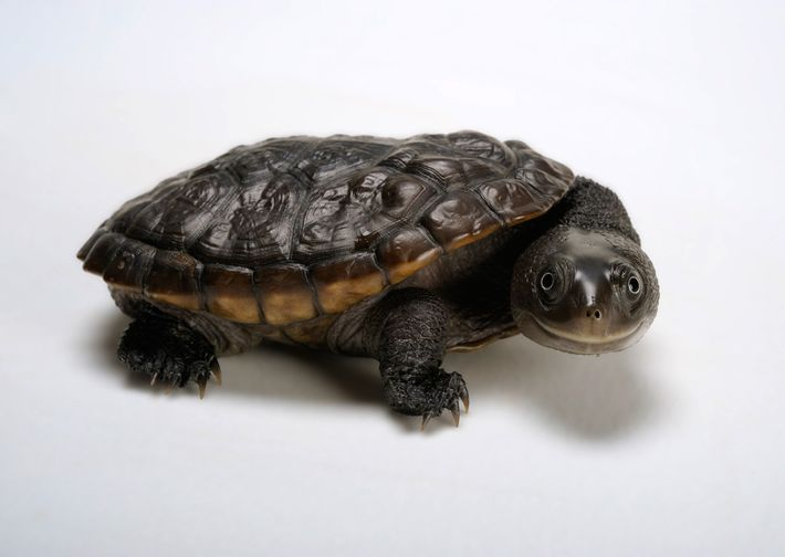 01-turtle-day-photo-ark