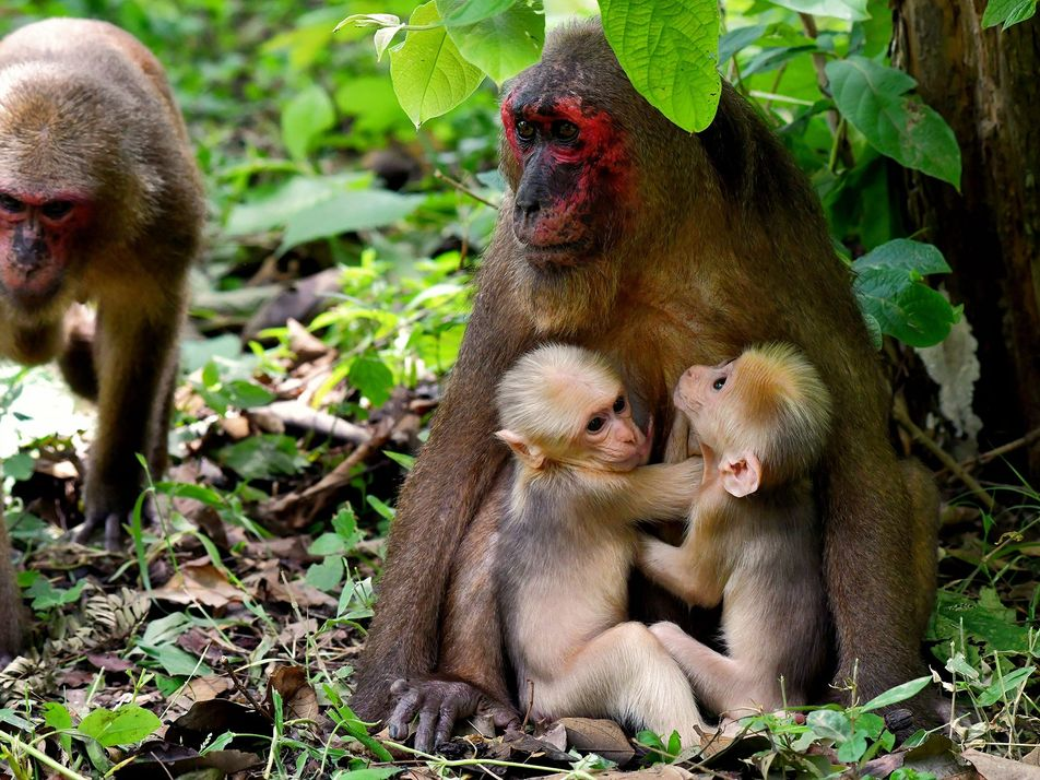 These Ultra-rare Monkey Twins Have Different Fathers