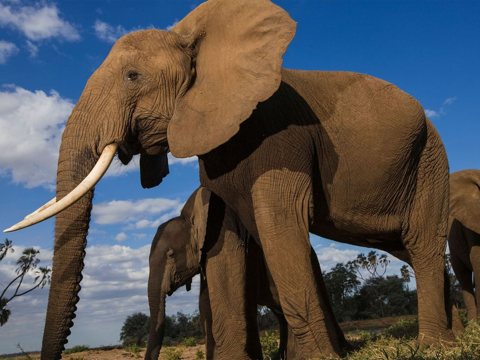 UK to Introduce 'Toughest' Ivory Ban in the World