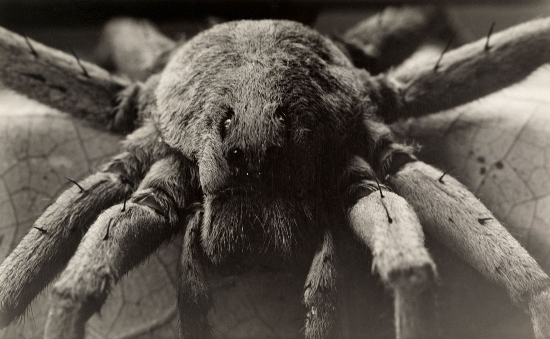 Vintage Photos of Insects and Spiders in Vivid Detail