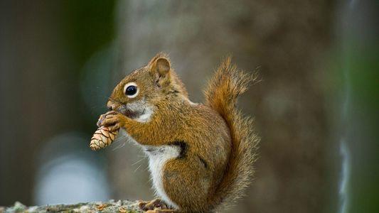Why a Squirrel Stashed 50 Pounds of Pine Cones in a Car
