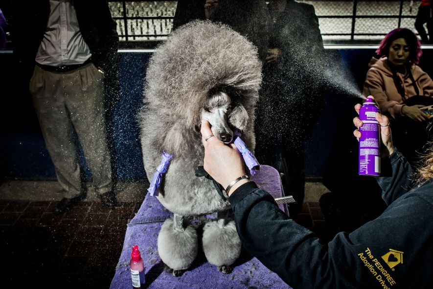 Your Back Stage Pass to the Westminster Dog Show