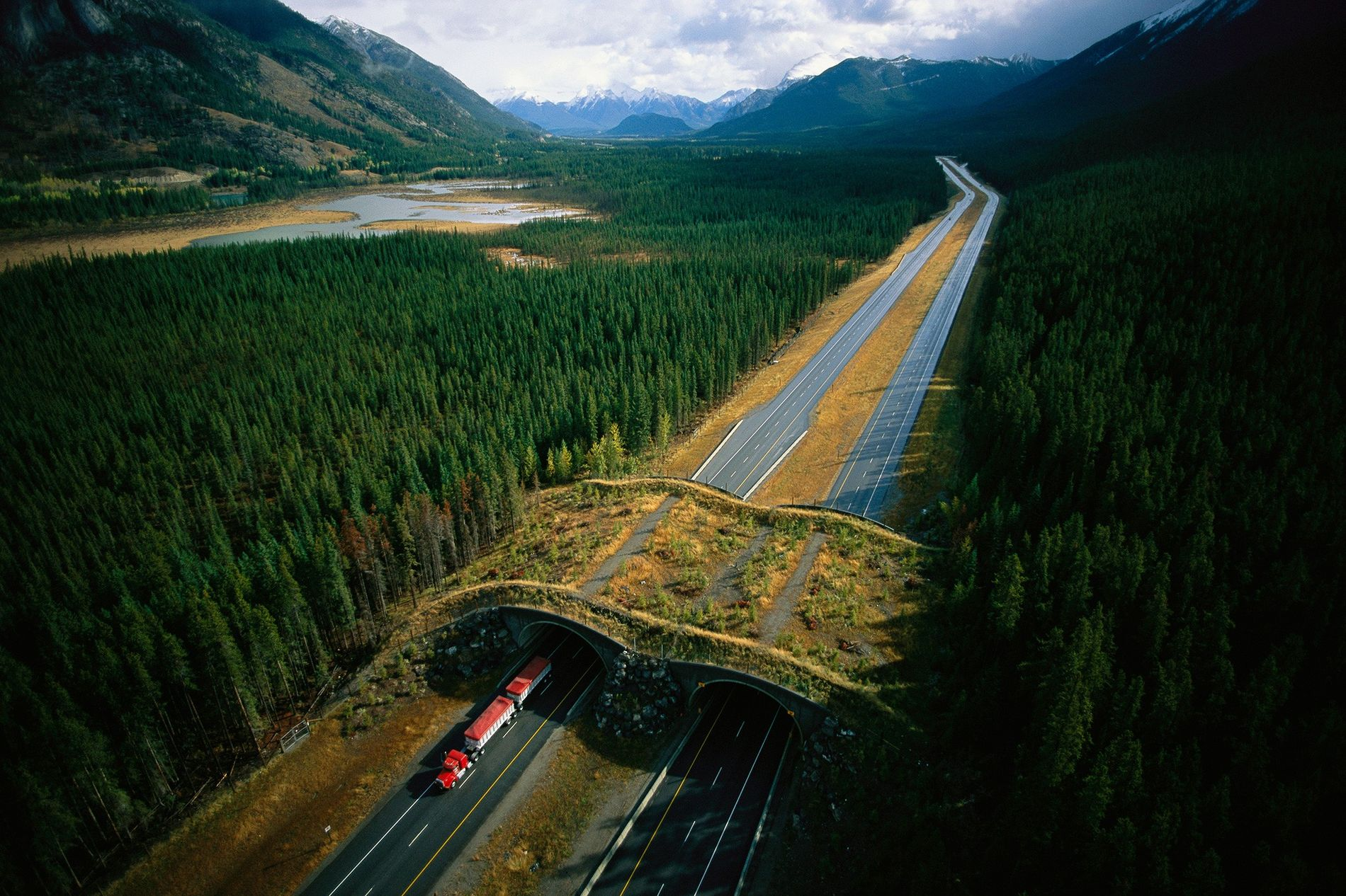 The Trans-Canada Highway wildlife crossings in Banff National Park have served as science-based inspiration for averting ...