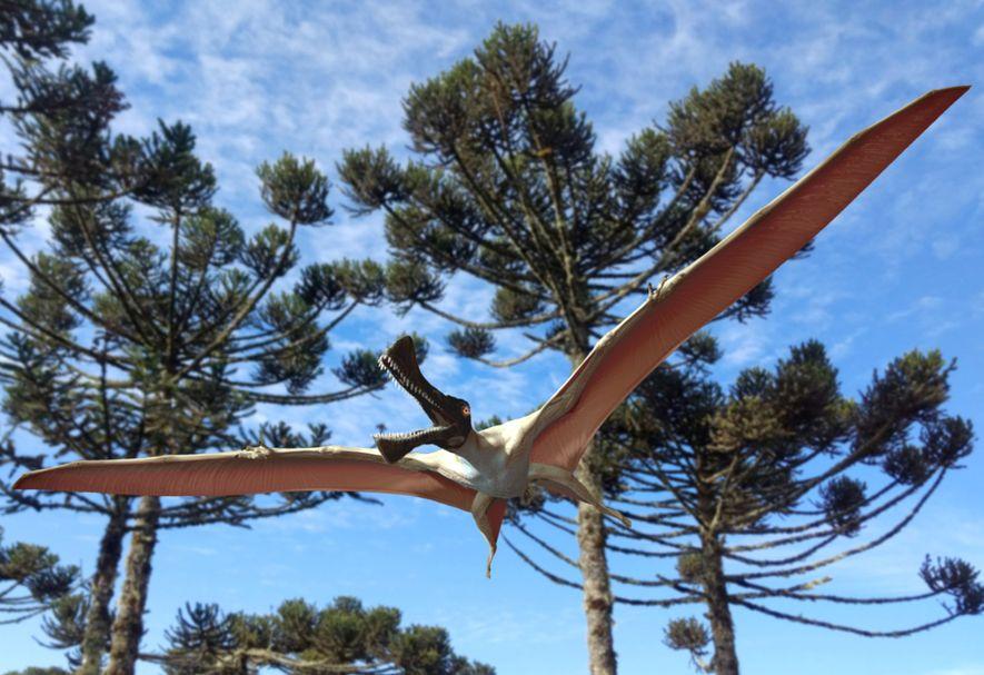 New 'iron dragon' pterosaur found in Australia