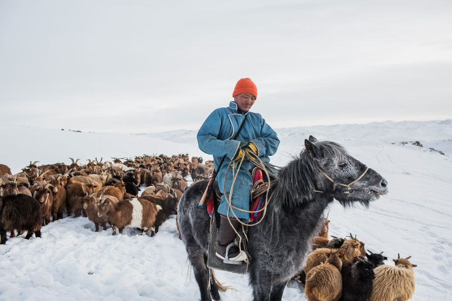 The Dangers of Dzud, Mongolia's Lethal Winters