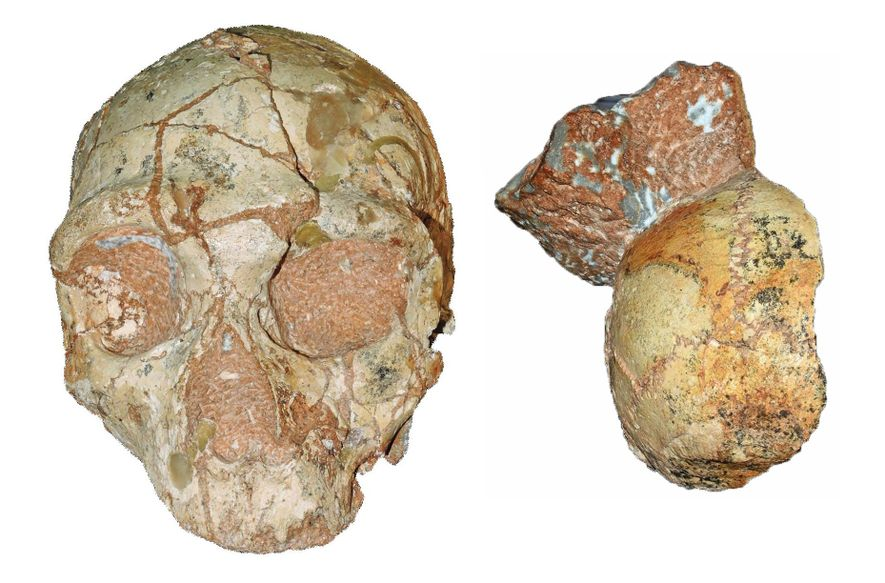 Enigmatic skull may be the oldest modern human outside Africa. But questions abound.