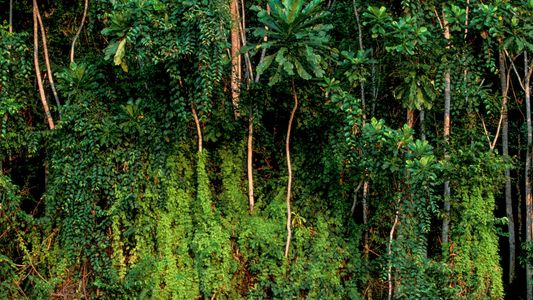 Biodiversity Is In Free Fall. Here's How We Can Fix It.