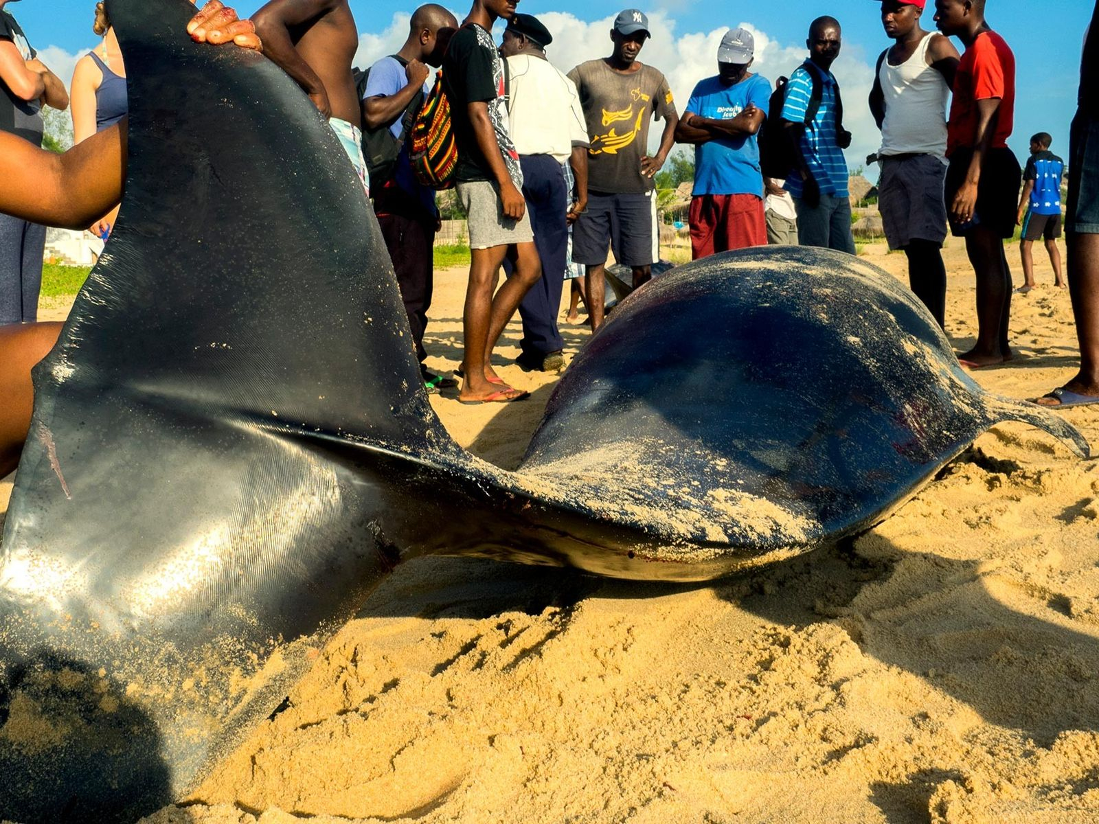 People harvest the meat of beached whales in Praia do Tofo, Mozambique.