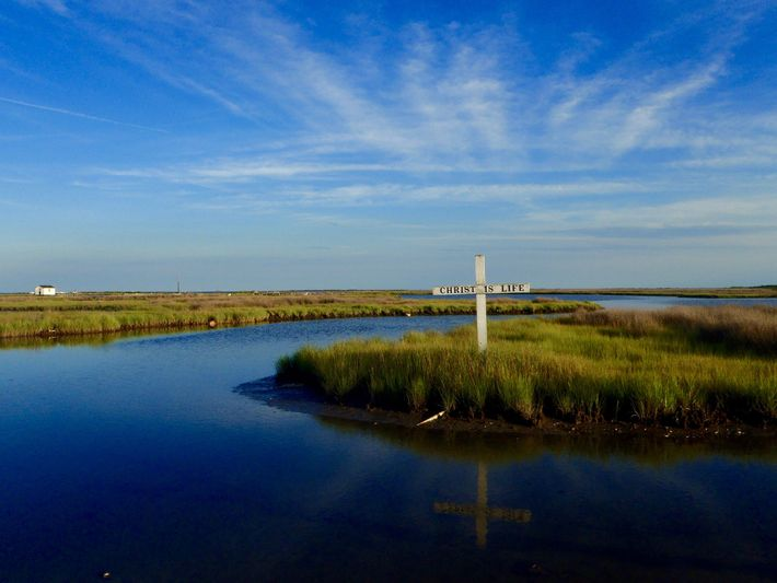 As Tangier Island, in the Chesapeake Bay, sinks and the surrounding water rises, its marshland is ...