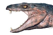 The extinct crocodilian Pakasuchus, seen here in an illustration, was an herbivore, according to analysis of ...