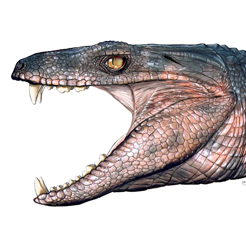 Plant-eating crocodiles thrived in dinosaur times