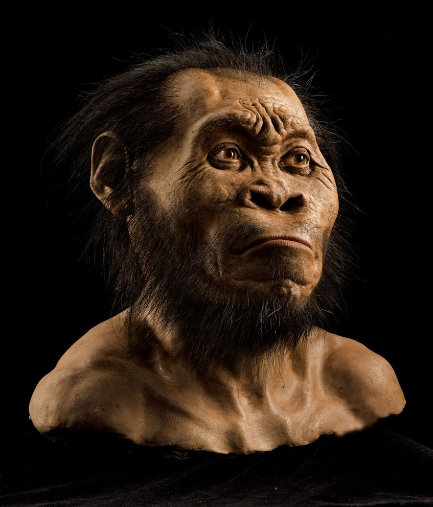 While primitive in some respects, the face, skull, and teeth (seen in this reconstruction) show enough ...