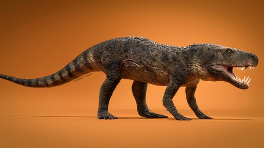 This newly discovered species of prehistoric reptile, called Dynamosuchus collisensi, lived 230 million years ago during ...